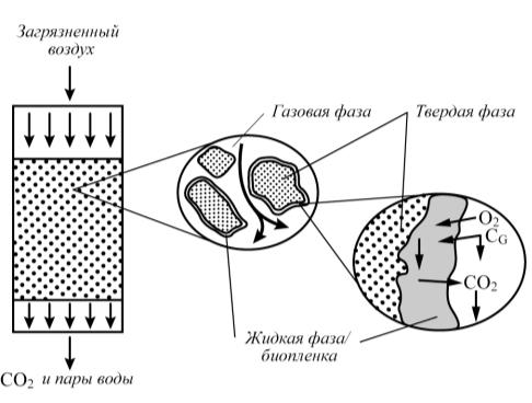 Рис. 1. Схема процесса биофильтрации [1]