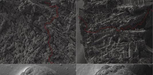 Рис. 3. Структура гранул ПАС