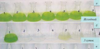 Рис. 3. Влияние разных доз (мг/л) биоцида MF-ВWR-112 на зеленые водоросли: 1 – без биоцида; 2 – 30; 3 – 50; 4 – 100; 5 – 10; 6 – 15; 7 – 20