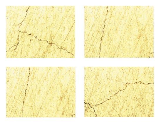 Рис. 7. Фотографии микроструктуры поверхности шлифа. x100